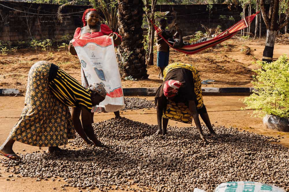 Cashews Nigeria